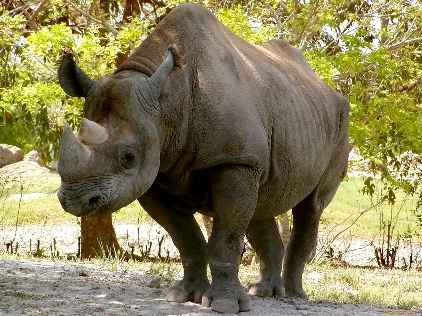 Картинка носорога и оленя